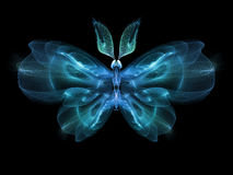 Vlinderelegantie Stock Fotografie