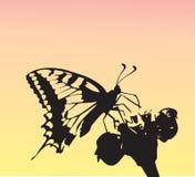 Vlinderfleis aan een bloem 1 Stock Afbeelding