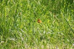 Vlindergebied stock afbeeldingen