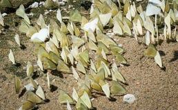 Vlindergroep ter plaatse Royalty-vrije Stock Foto