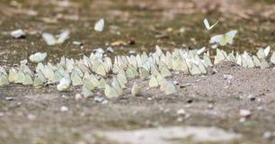 Vlindergroep ter plaatse Royalty-vrije Stock Fotografie