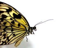 Vlinderinsect Royalty-vrije Stock Afbeeldingen