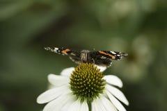 Vlindermacro royalty-vrije stock afbeeldingen