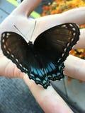 Vlinders 2 stock afbeeldingen