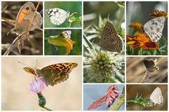 Vlinders. Stock Foto's