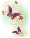 Vlinders Stock Afbeelding