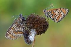 Vlinders Stock Foto's