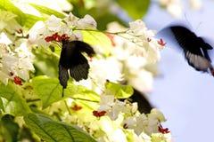 Vlinders in actie stock afbeeldingen