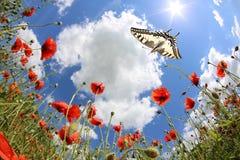 Vlinders bij de lente Royalty-vrije Stock Afbeeldingen