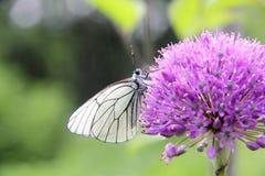 Vlinders. Bloem. Royalty-vrije Stock Foto
