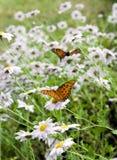 Vlinders in de bloemen stock foto's