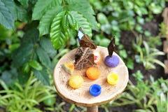 Vlinders in de Botanische Tuin stock afbeeldingen