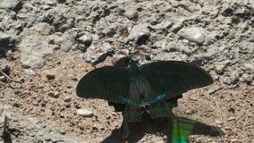 Vlinders in de wildernis