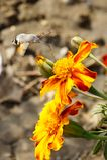 Vlinders De zomer De natuurlijke schoonheid van Rusland stock foto
