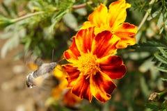 Vlinders De zomer De natuurlijke schoonheid van Rusland royalty-vrije stock foto