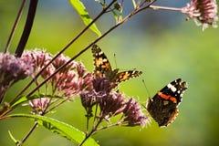 Vlinders in de zomertuin stock foto