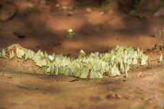 Vlinders die zich op grondgrond bevinden in het nationale park van Pang Sida, Sakaeo, Thailand royalty-vrije stock afbeelding