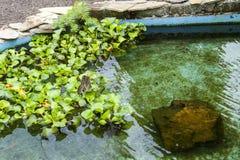 Vlinders in een ecologische oase Royalty-vrije Stock Foto
