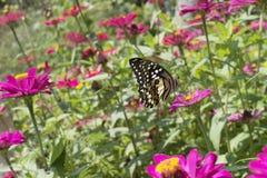 Vlinders in een mooie bloemtuin stock foto