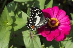 Vlinders in een mooie bloemtuin royalty-vrije stock foto