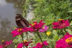 Vlinders in een mooie bloemtuin royalty-vrije stock fotografie