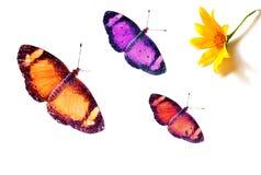 Vlinders en Bloem Stock Foto