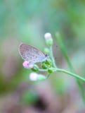 Vlinders en bloemen Royalty-vrije Stock Foto