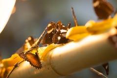 Vlinders en lamp Stock Fotografie