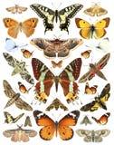 Vlinders en motten royalty-vrije stock fotografie