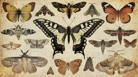 Vlinders en motten stock afbeeldingen