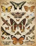 Vlinders en motten stock fotografie