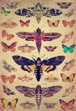 Vlinders en motten royalty-vrije stock afbeelding