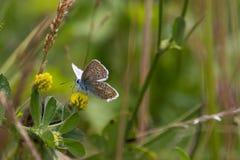 Vlinders in het hout Royalty-vrije Stock Foto's