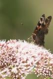Vlinders in het hout Stock Afbeeldingen