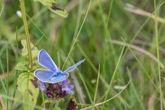Vlinders in het hout Stock Foto's