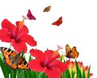 Vlinders op bloemen royalty-vrije stock afbeeldingen
