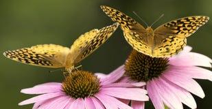Vlinders op bloemen stock fotografie
