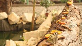 Vlinders op boomstam van boom stock footage