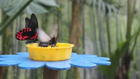 Vlinders op een bloem-Vormige Trog stock video
