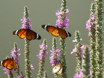 Vlinders op een installatie in hun natuurlijke habitat stock foto