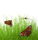 Vlinders op het gras royalty-vrije stock afbeeldingen