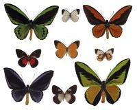 Vlinders op wit stock afbeeldingen