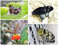 Vlinders - reeks van 4 fotoschoten Stock Fotografie