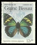 Vlinders, Turkooise Keizer royalty-vrije stock afbeelding