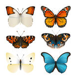 Vlinders vectorreeks Kleurrijke vlakke vlinder Realistische kleurengradiënt Stock Foto's