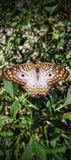 Vlinderschoonheid royalty-vrije stock foto