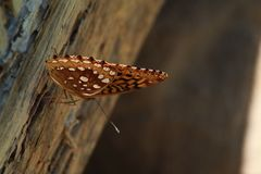 Vlinderschuur royalty-vrije stock foto