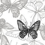 Vlinderssilhouetten Vlinderpictogrammen die op witte achtergrond worden ge?soleerd Grafische illustratie Naadloze patronen royalty-vrije stock fotografie