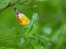 Vlindersvlieg bovenop de boom royalty-vrije stock afbeelding