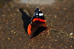 Vlinderurticaria ontmoet zonsondergang Stock Foto